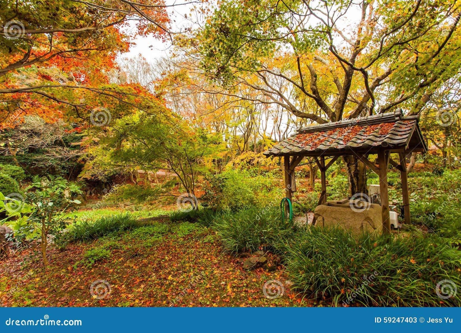 Bosque del otoño en Japón
