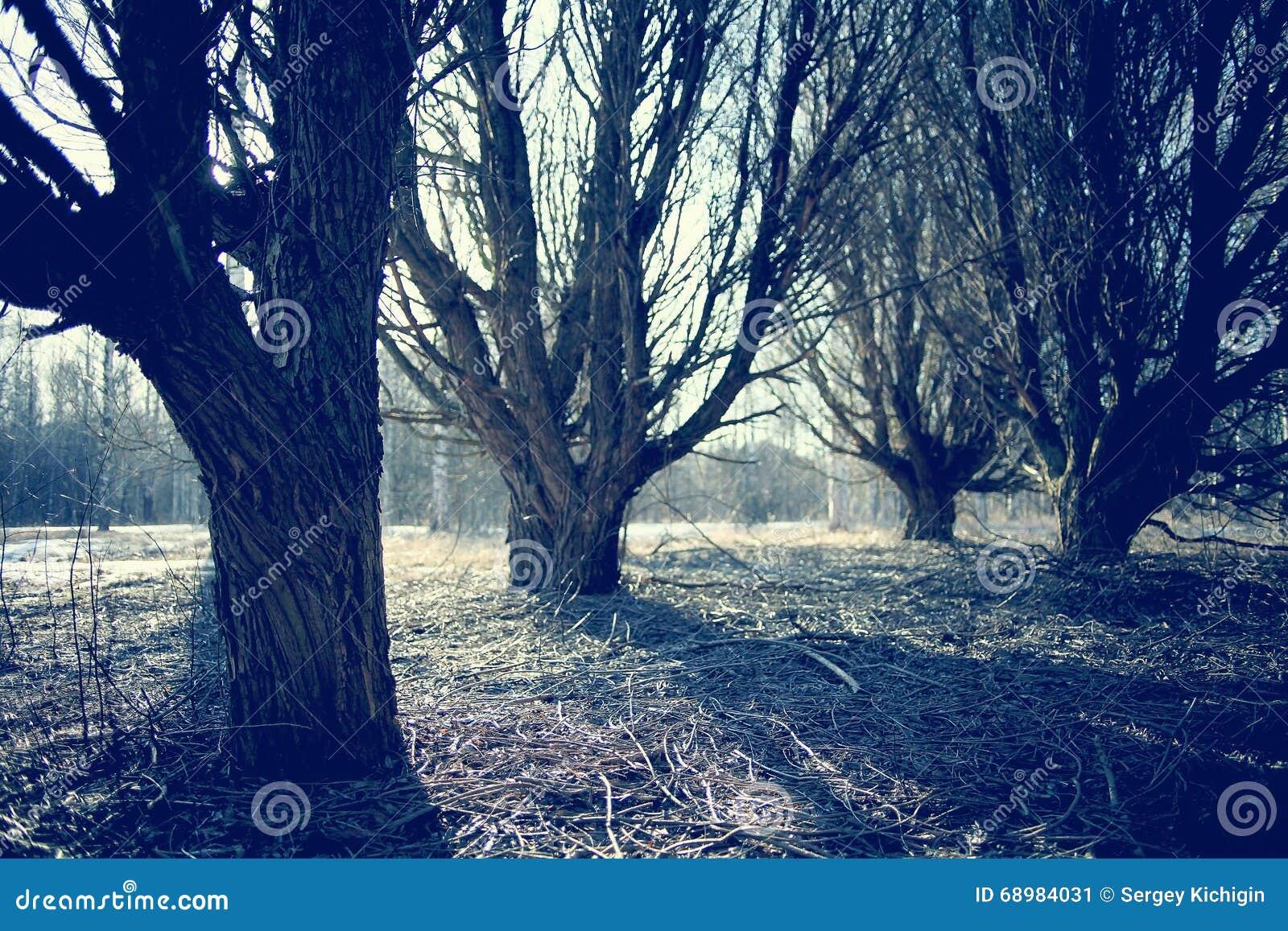 Bosque del paisaje