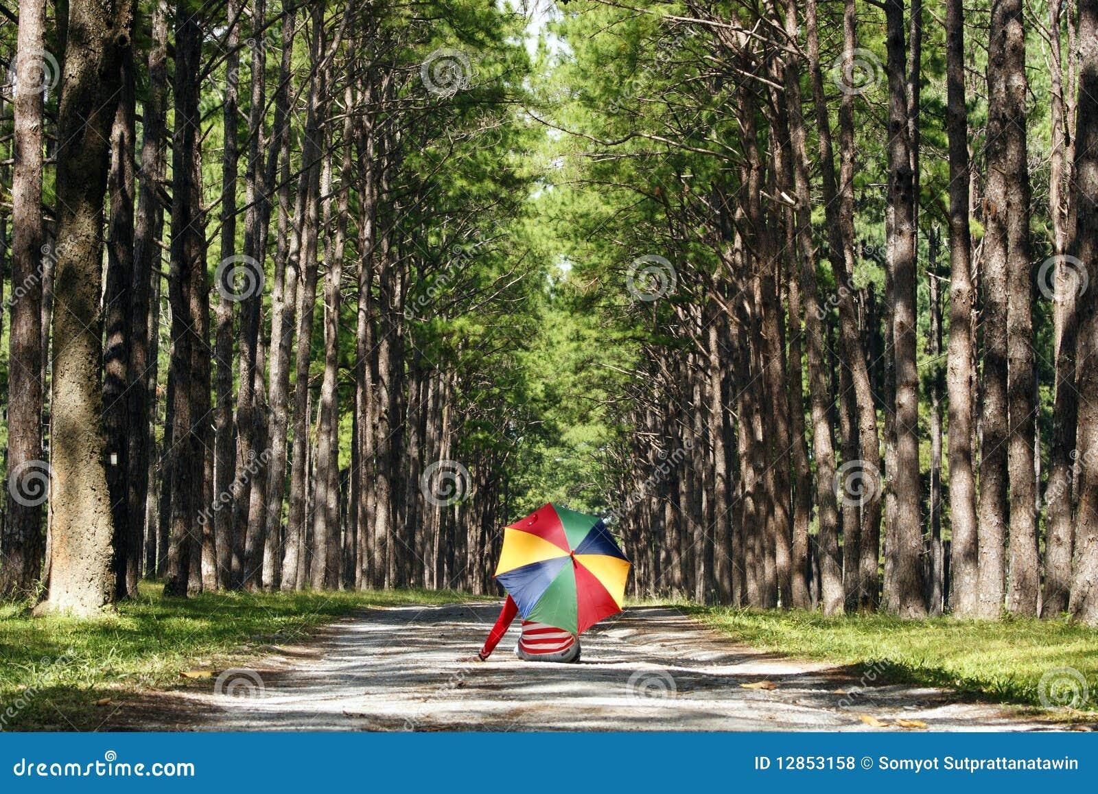 Bosque del pino
