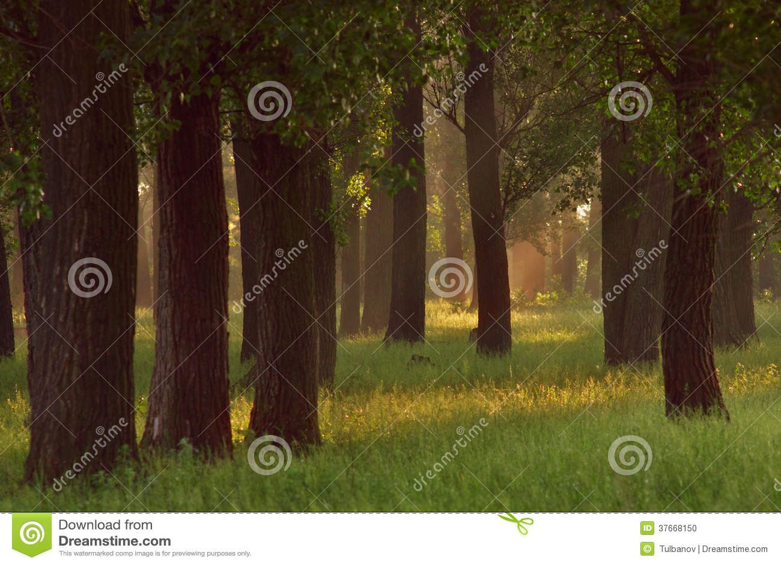 Bosque do carvalho