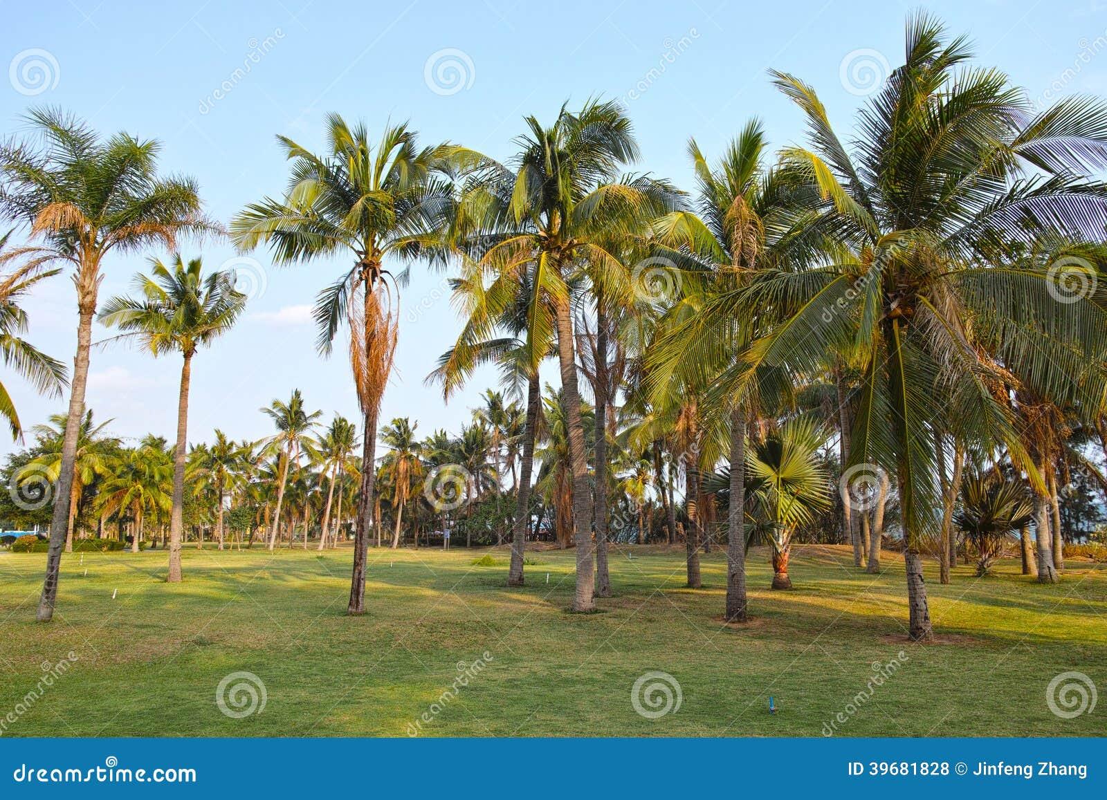 Bosque do coco