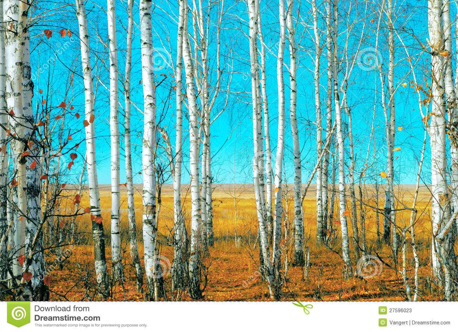Bosque do vidoeiro