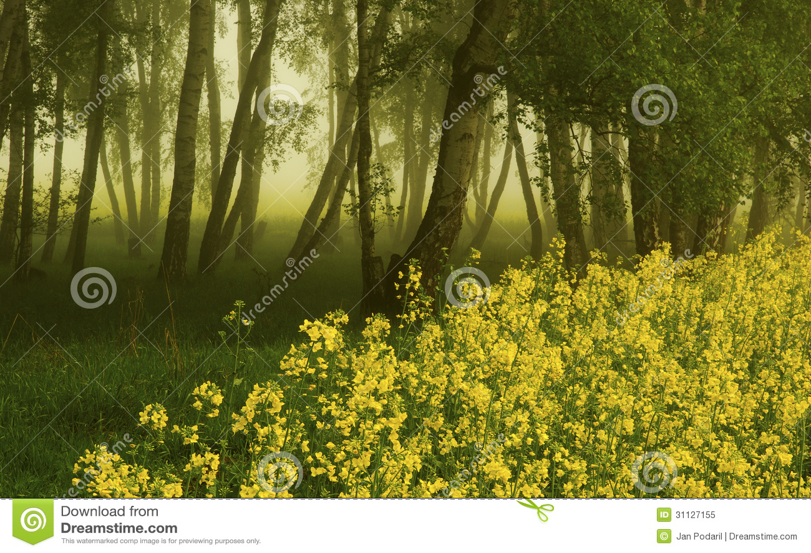 Bosque do vidoeiro com violação de semente oleaginosa