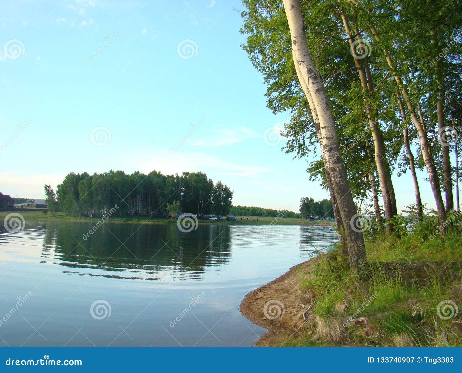 Bosque do vidoeiro na costa do reservatório de Irkutsk