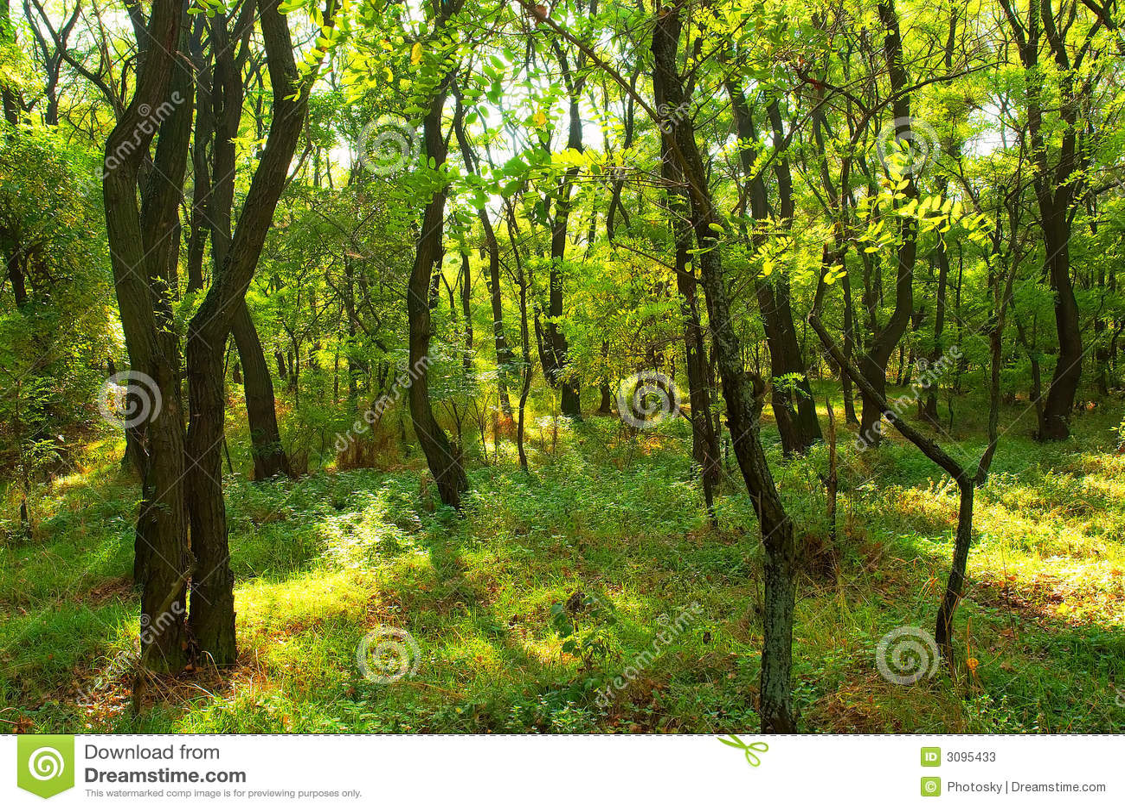 Bosque dos locustídeo no verão