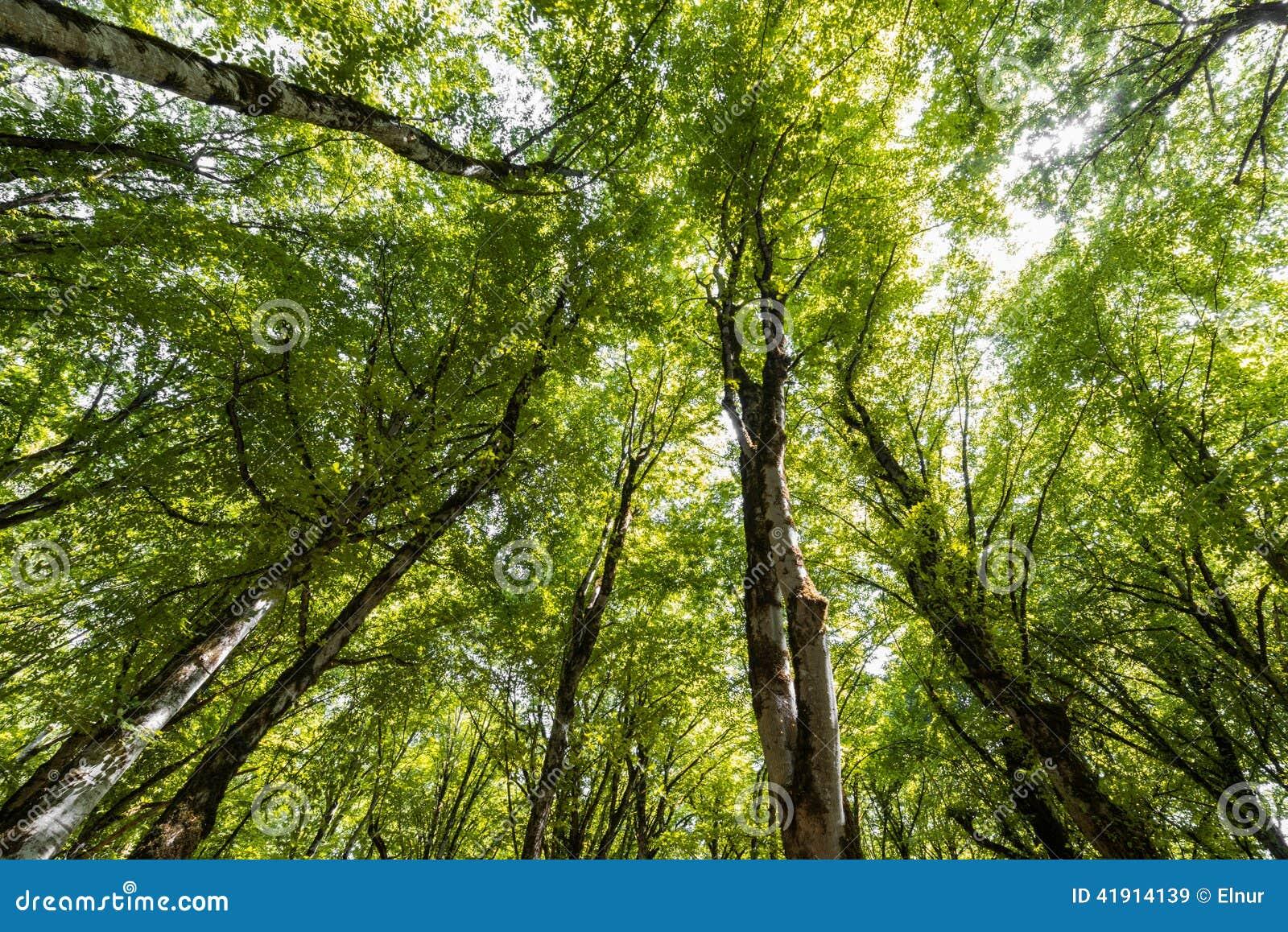 Bosque en el brillante