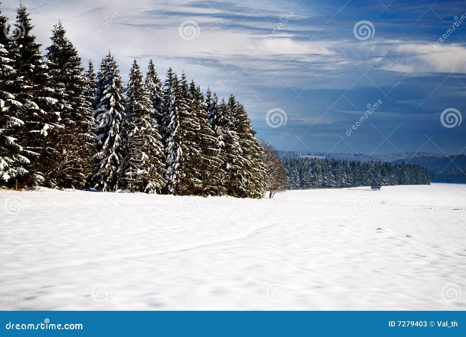 Bosque en el invierno 2