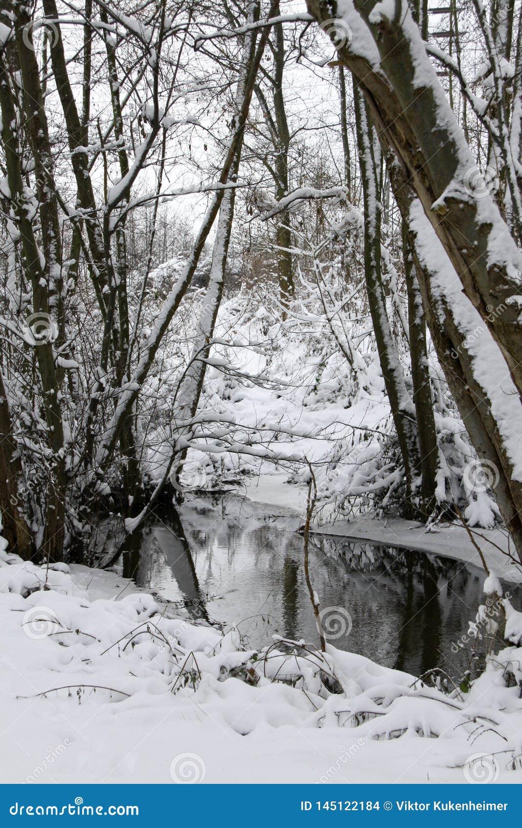 Bosque en invierno en The Creek