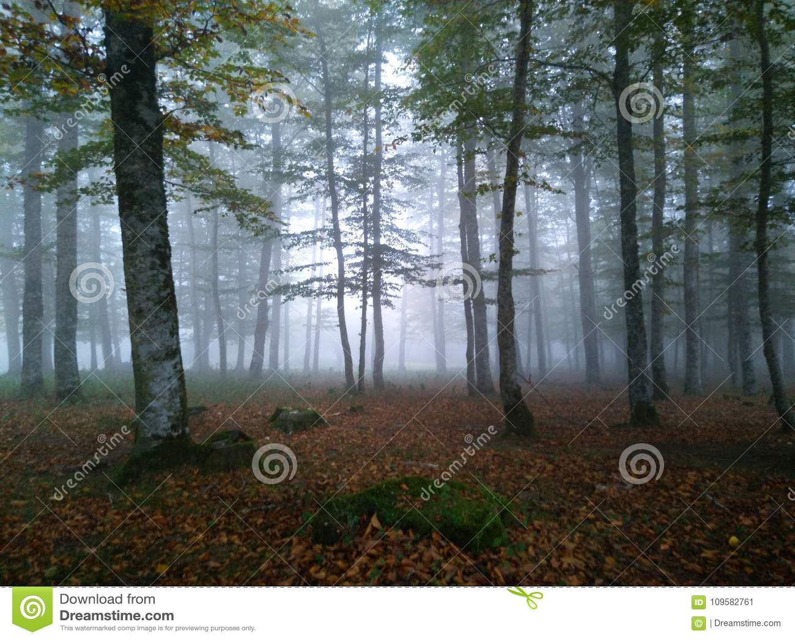 Bosque en la niebla de la mañana