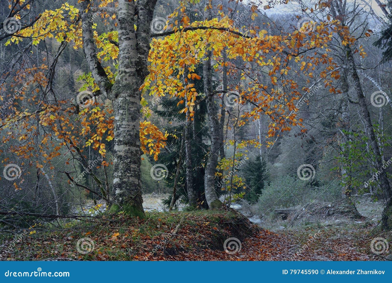 Bosque en montañas