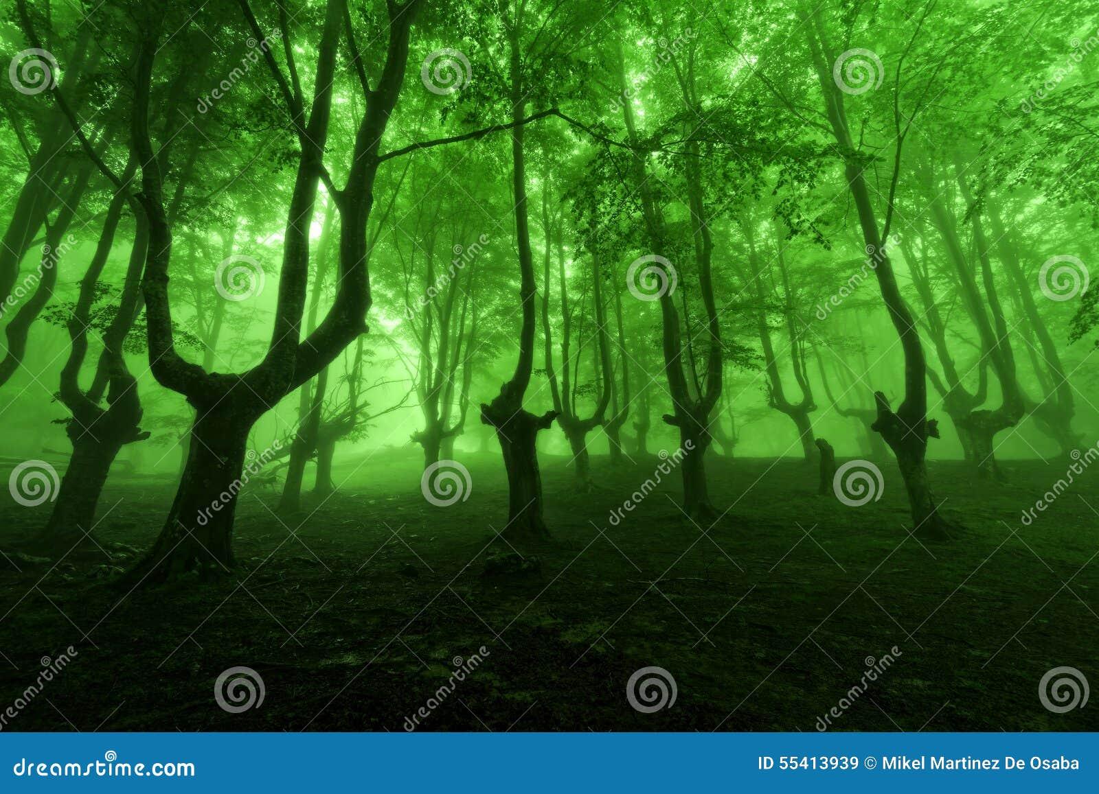 Bosque en primavera con niebla verde