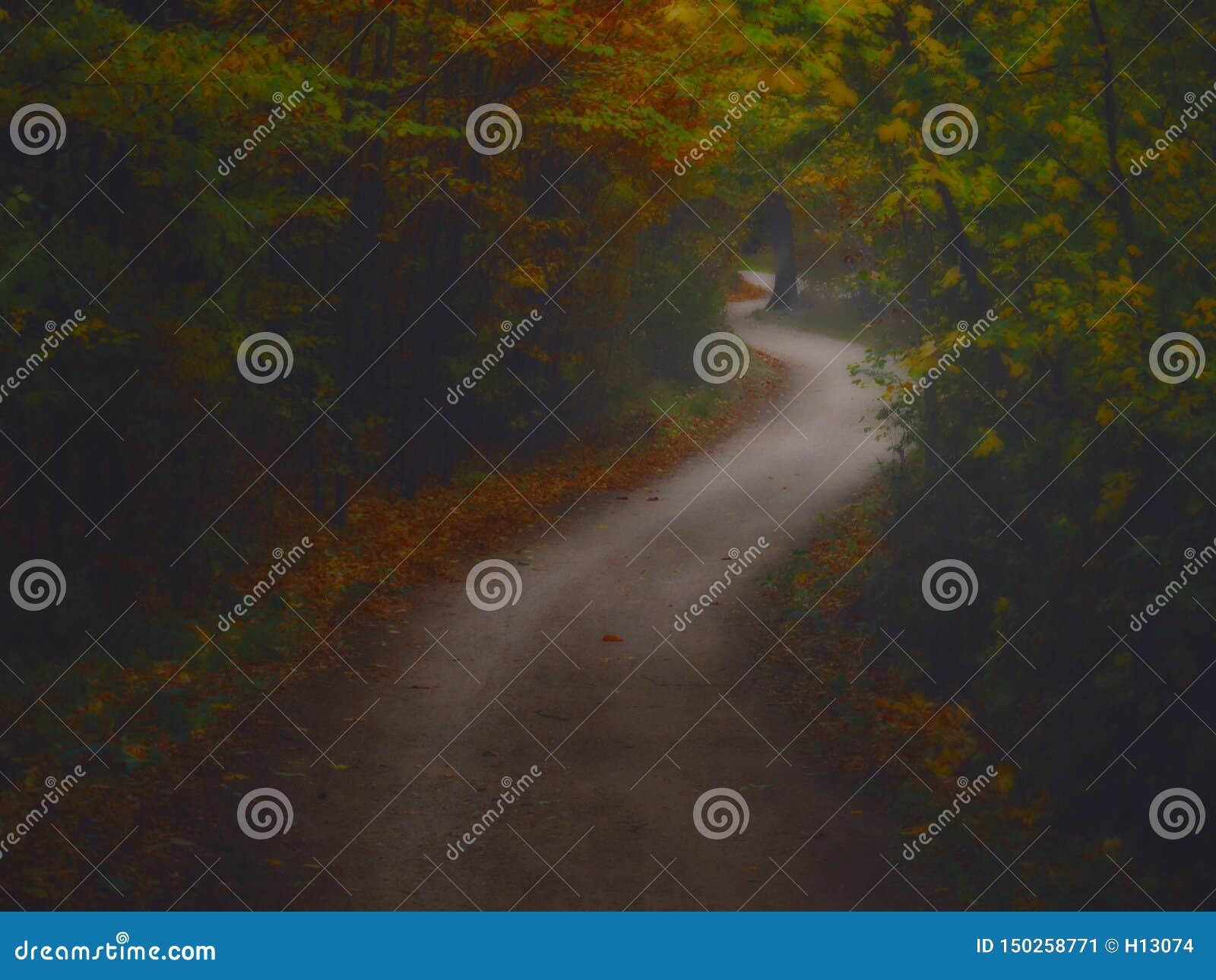 Bosque espeluznante oscuro con el camino formado curva doble