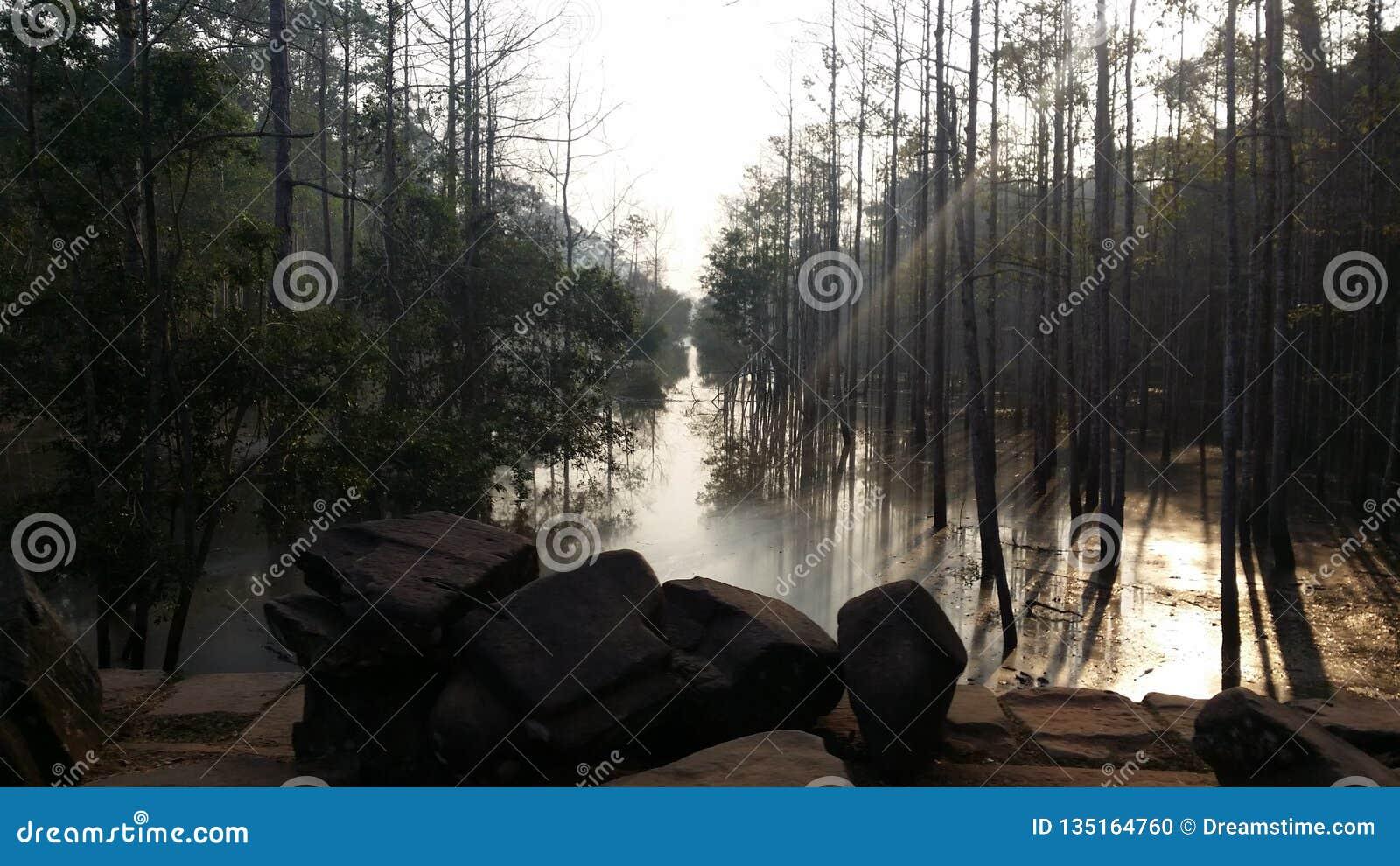 Bosque hermoso de Angkor