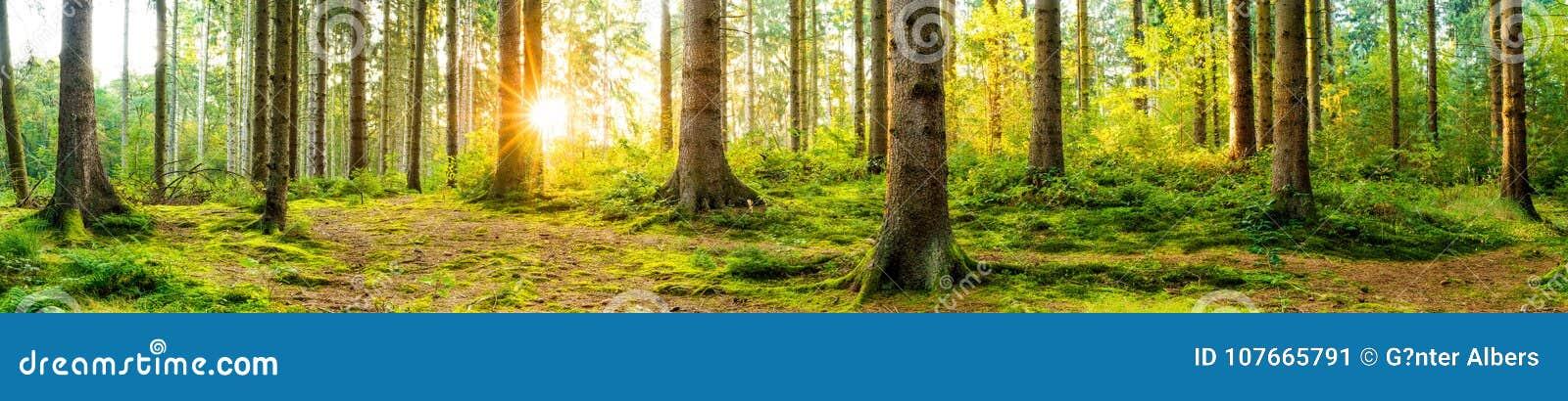 Bosque hermoso en la salida del sol