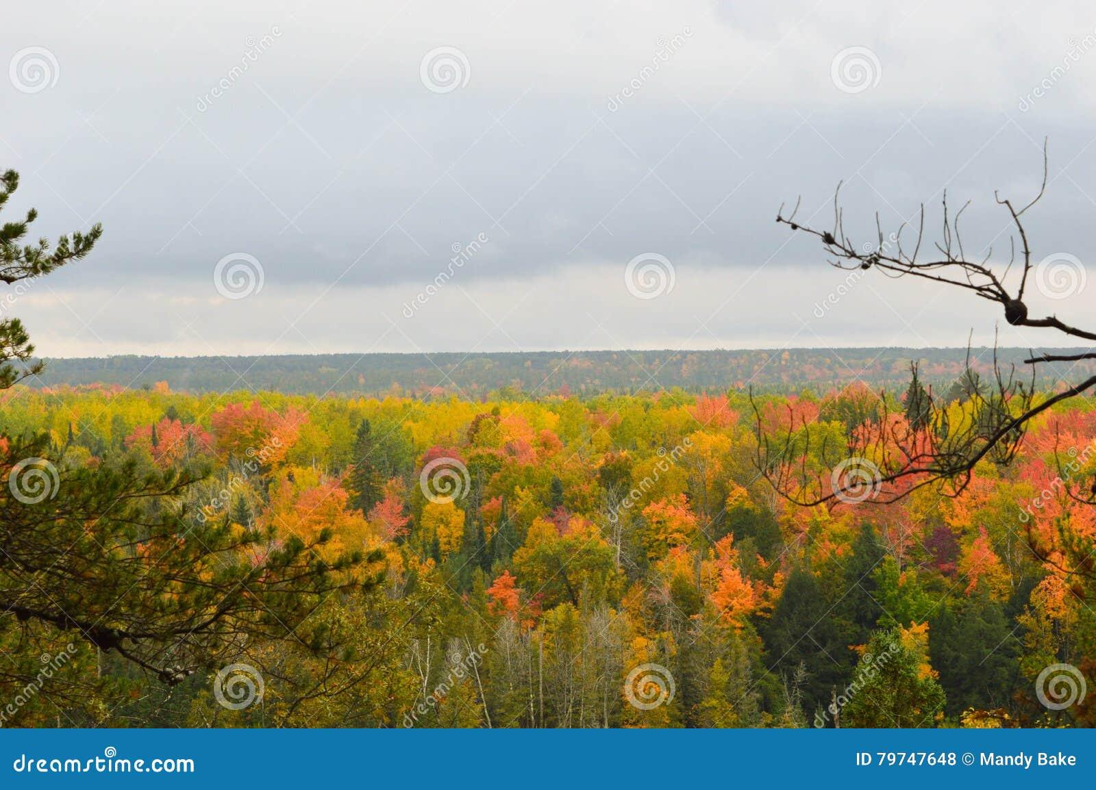 Bosque hermoso en otoño