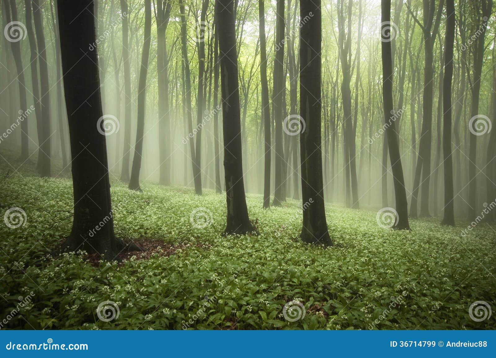 Bosque hermoso en primavera con niebla, plantas verdes y flores