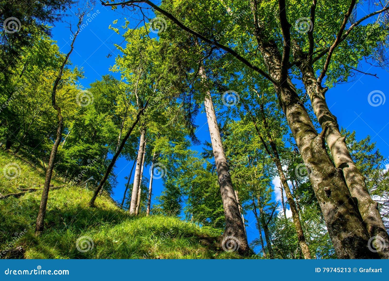 Bosque iluminado por el sol en la montaña en Austria