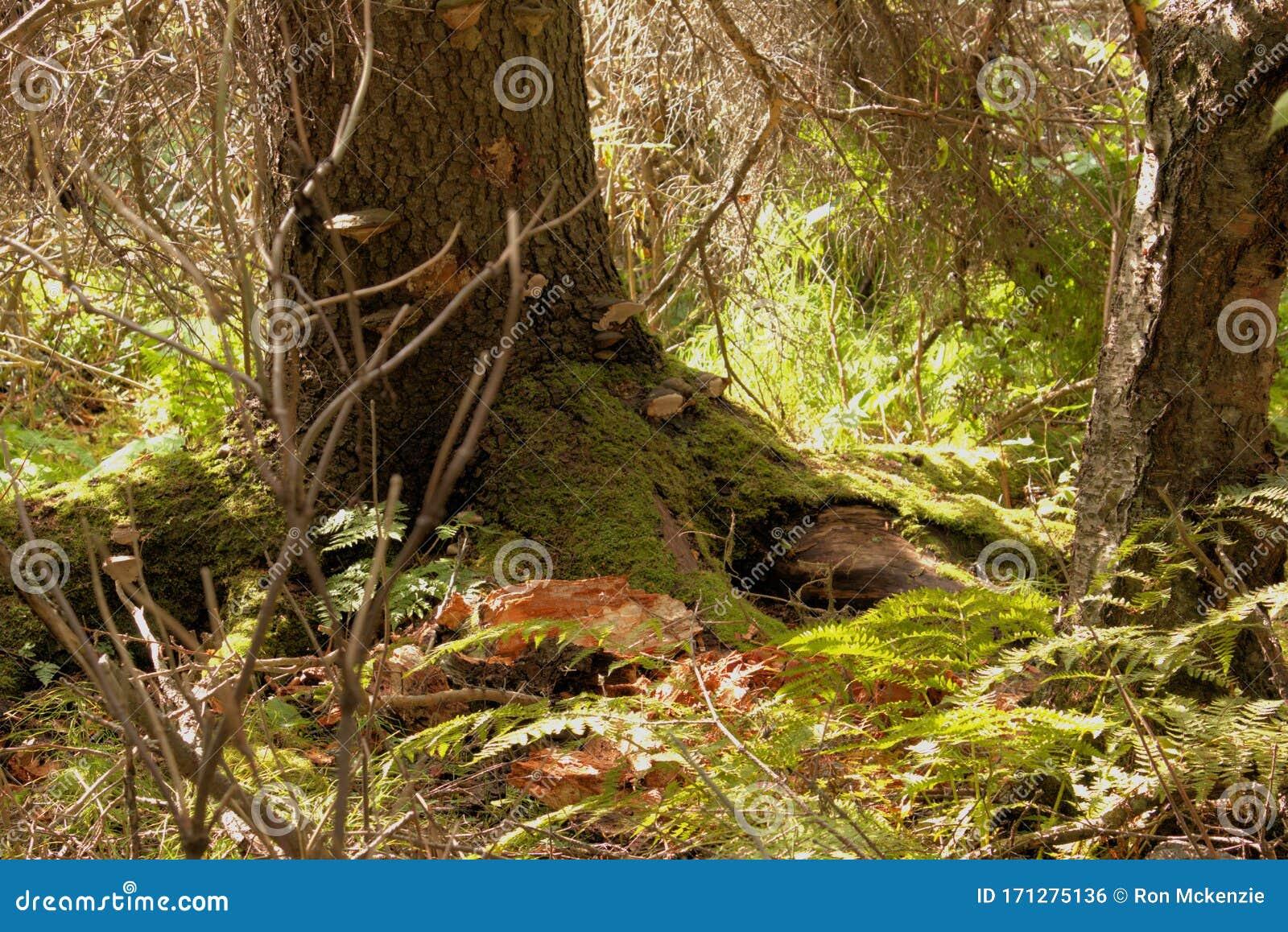 Bosque Lluvioso Colorido Foto De Archivo Imagen De Perenne 171275136