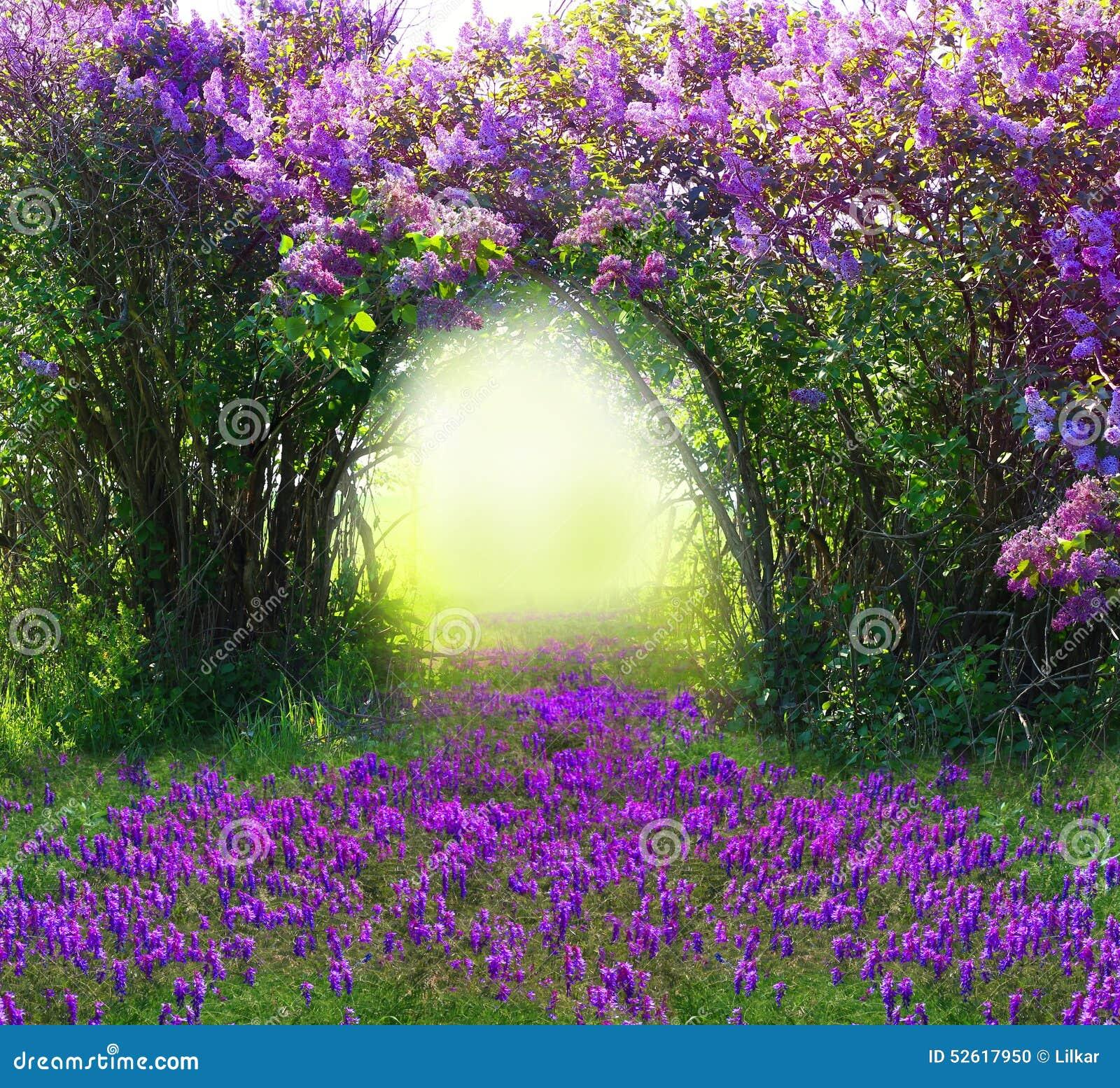 Bosque mágico de la primavera