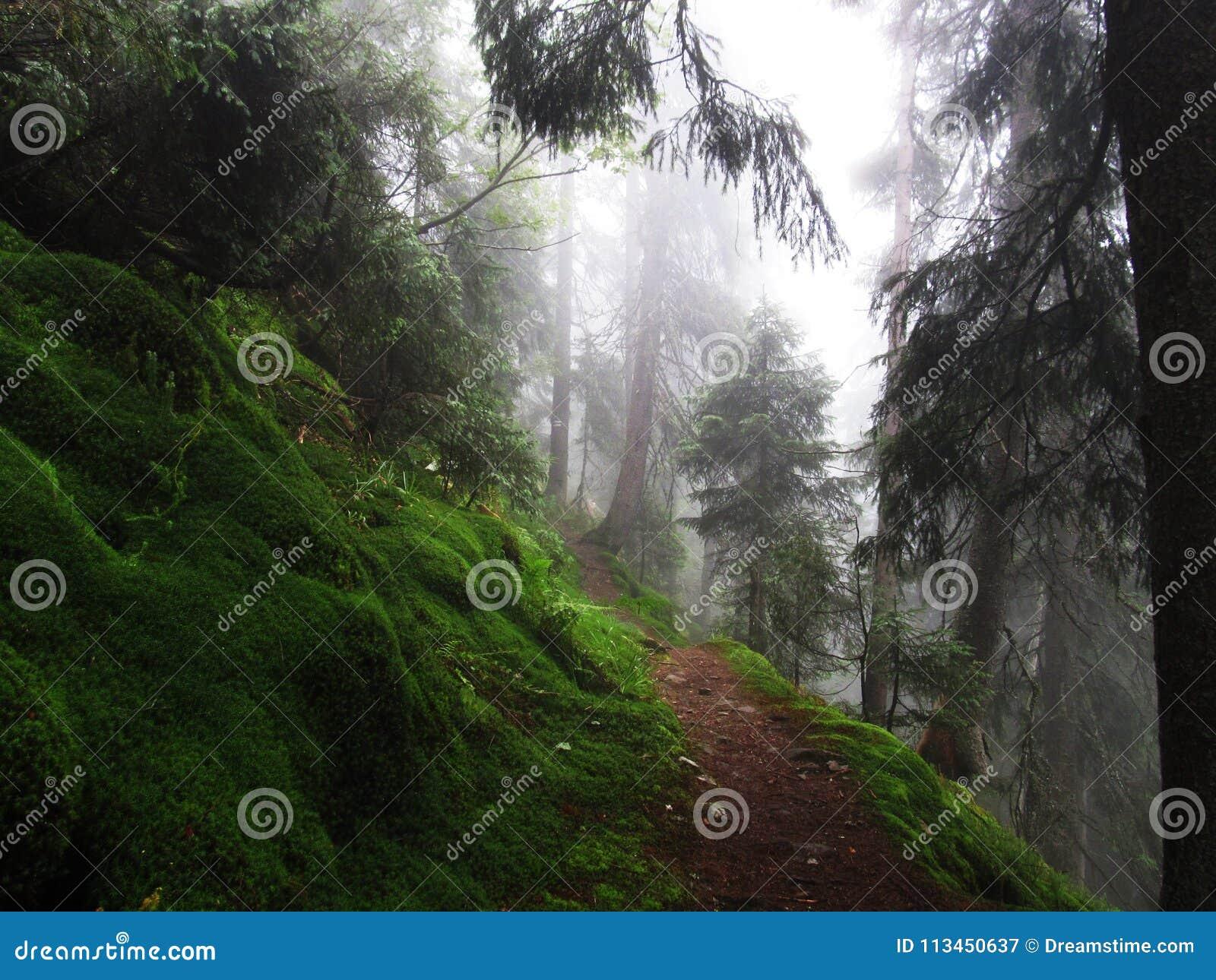 Bosque mágico en Cárpatos