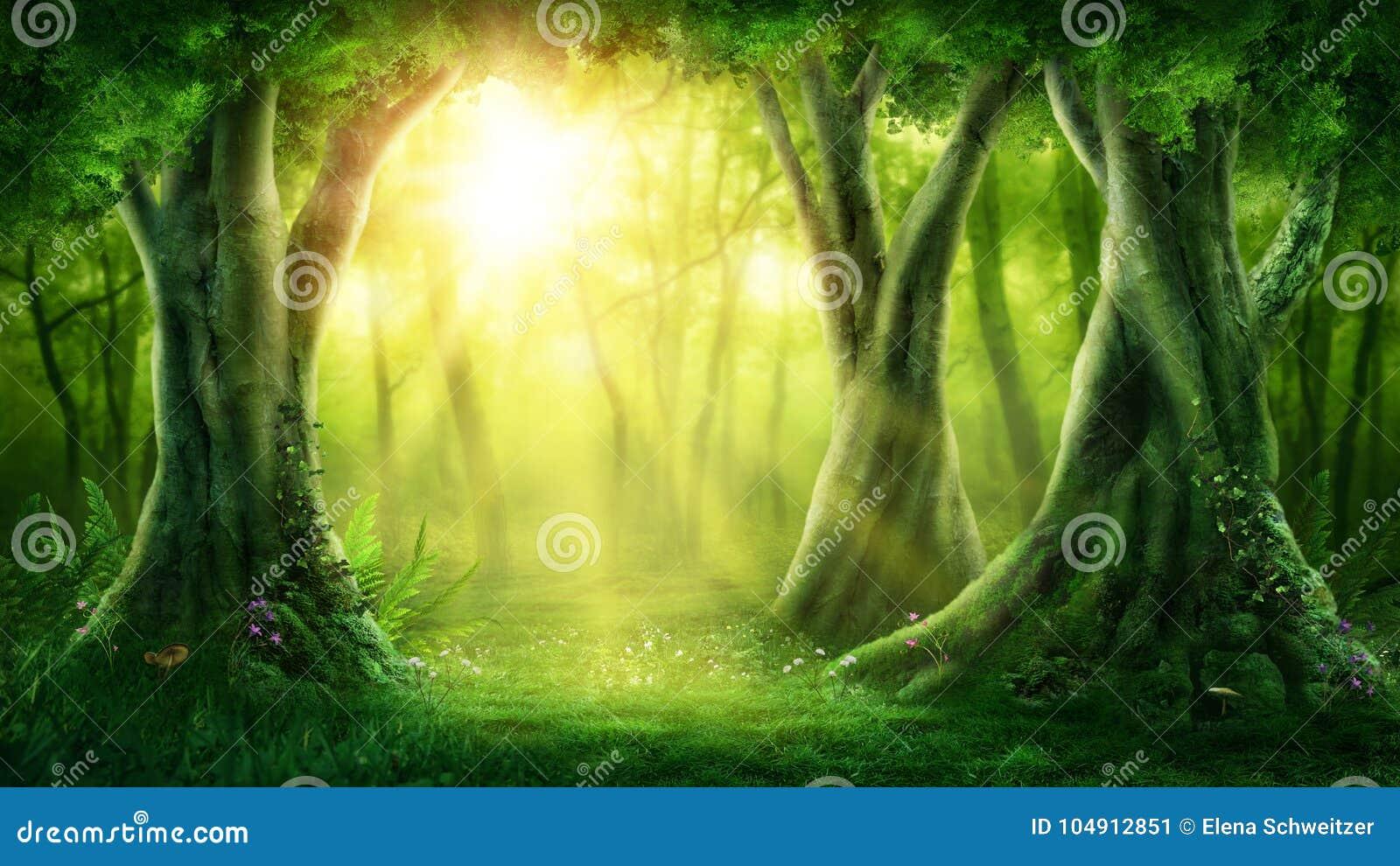 Bosque mágico oscuro