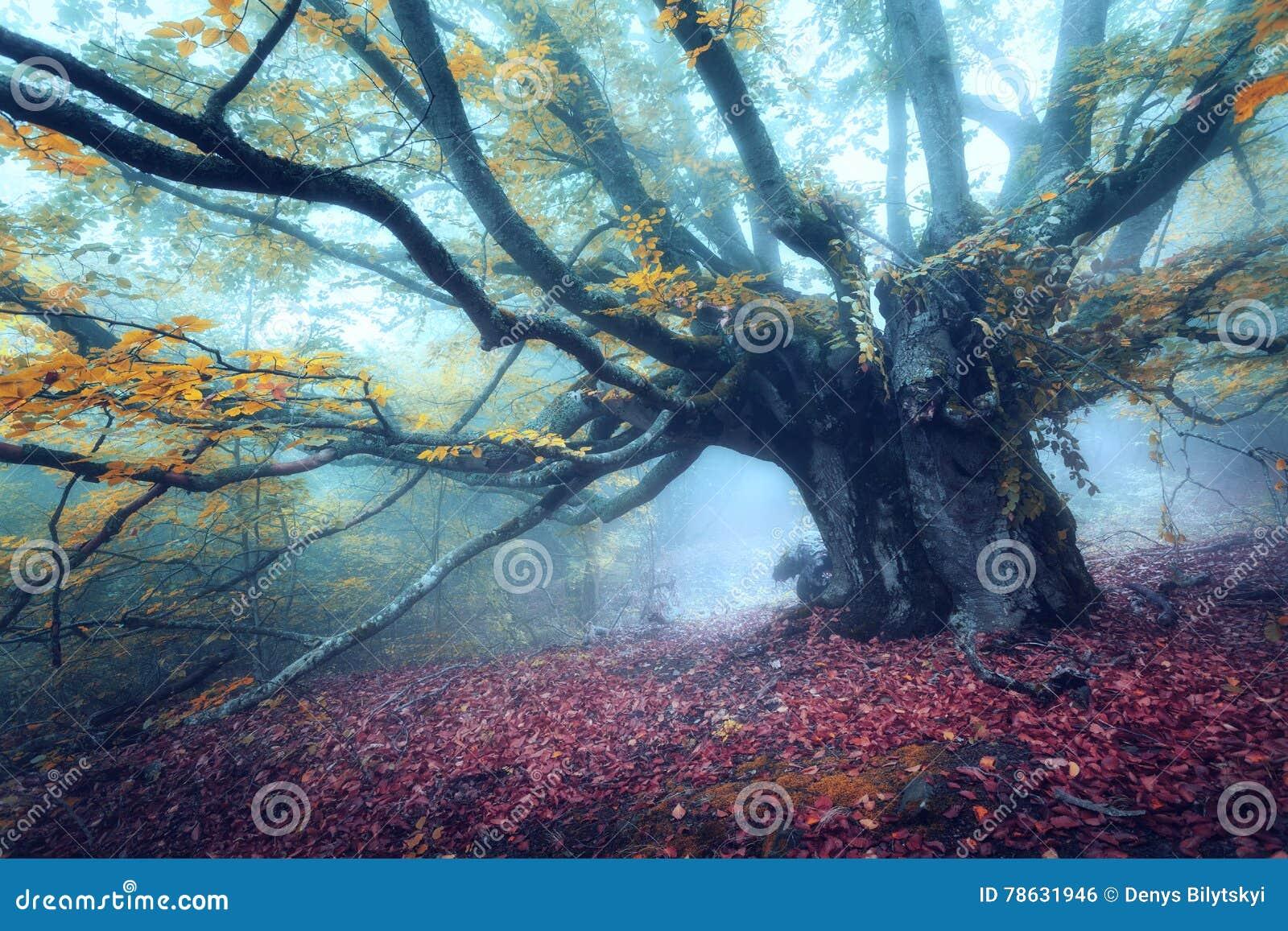 Bosque místico del otoño en niebla por la mañana Árbol viejo