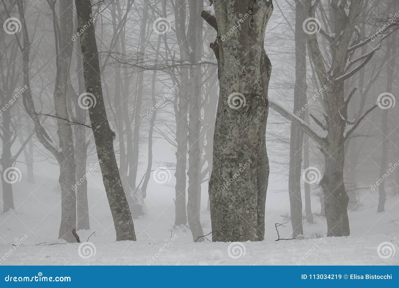 Bosque místico encantado en la estación del invierno con nieve