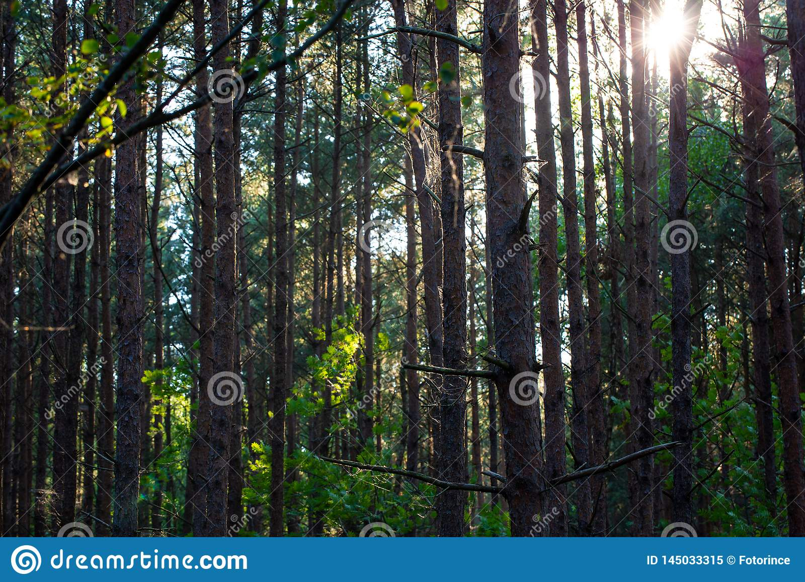 Bosque mezclado