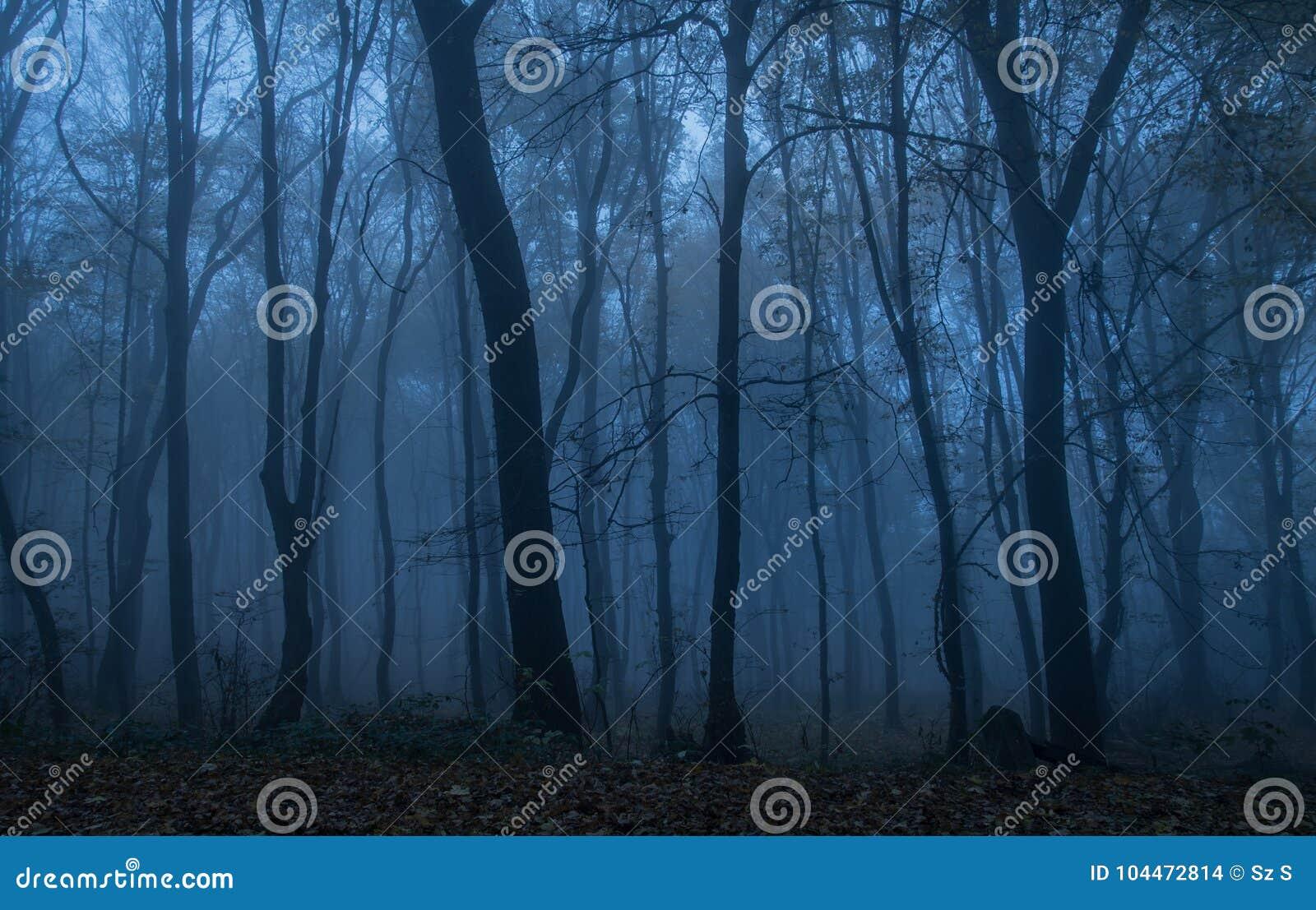 Bosque oscuro en la noche