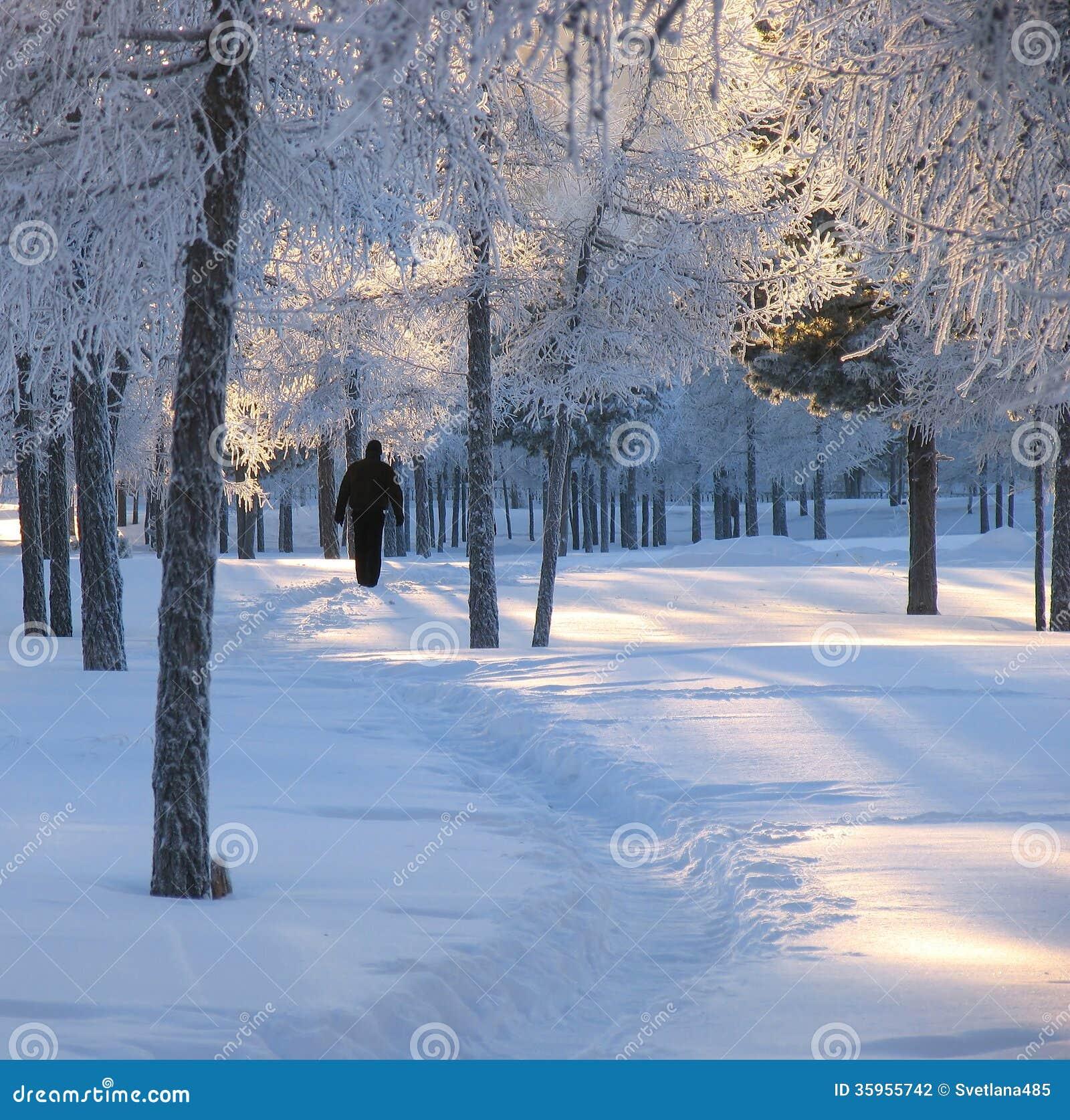 Bosque. Paisaje del invierno de la naturaleza.