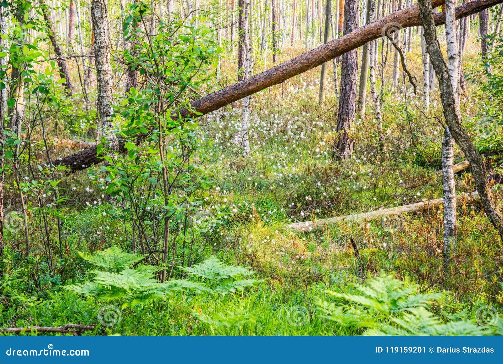 Bosque rico verde del pantano