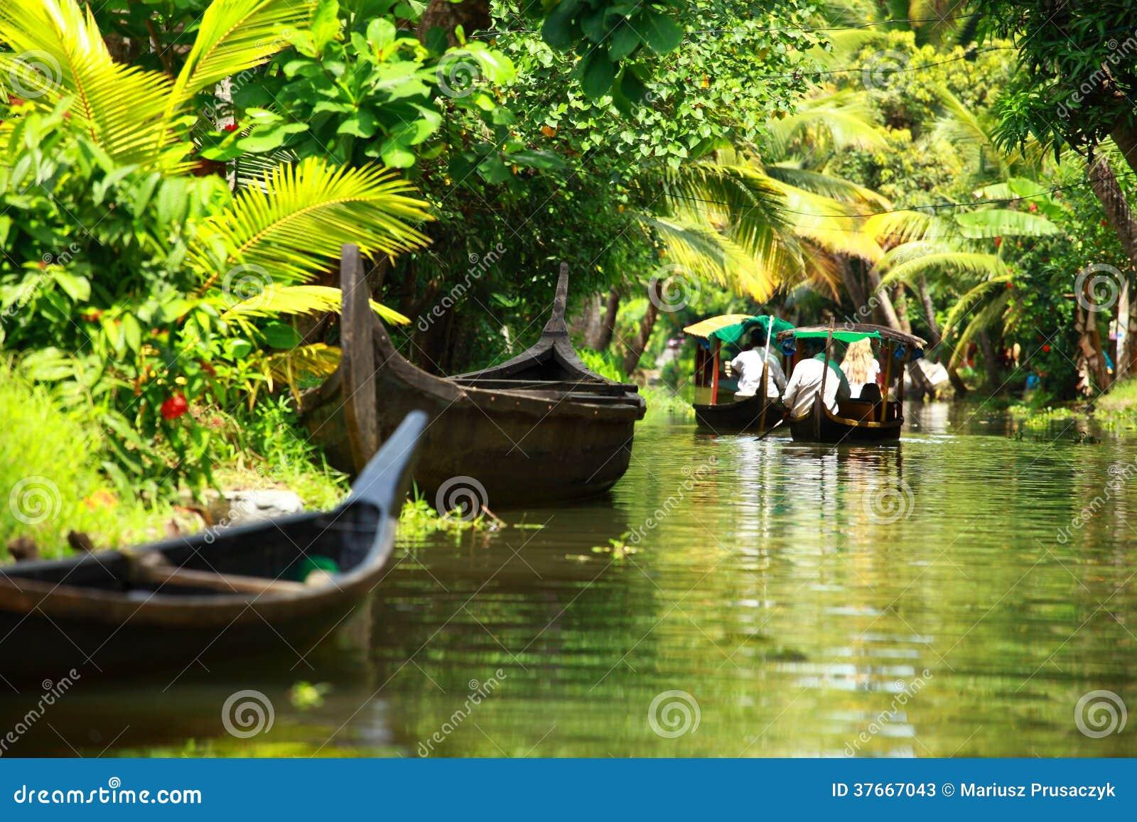 Bosque tropical de la palmera en el remanso de Kochin, Kerala, la India