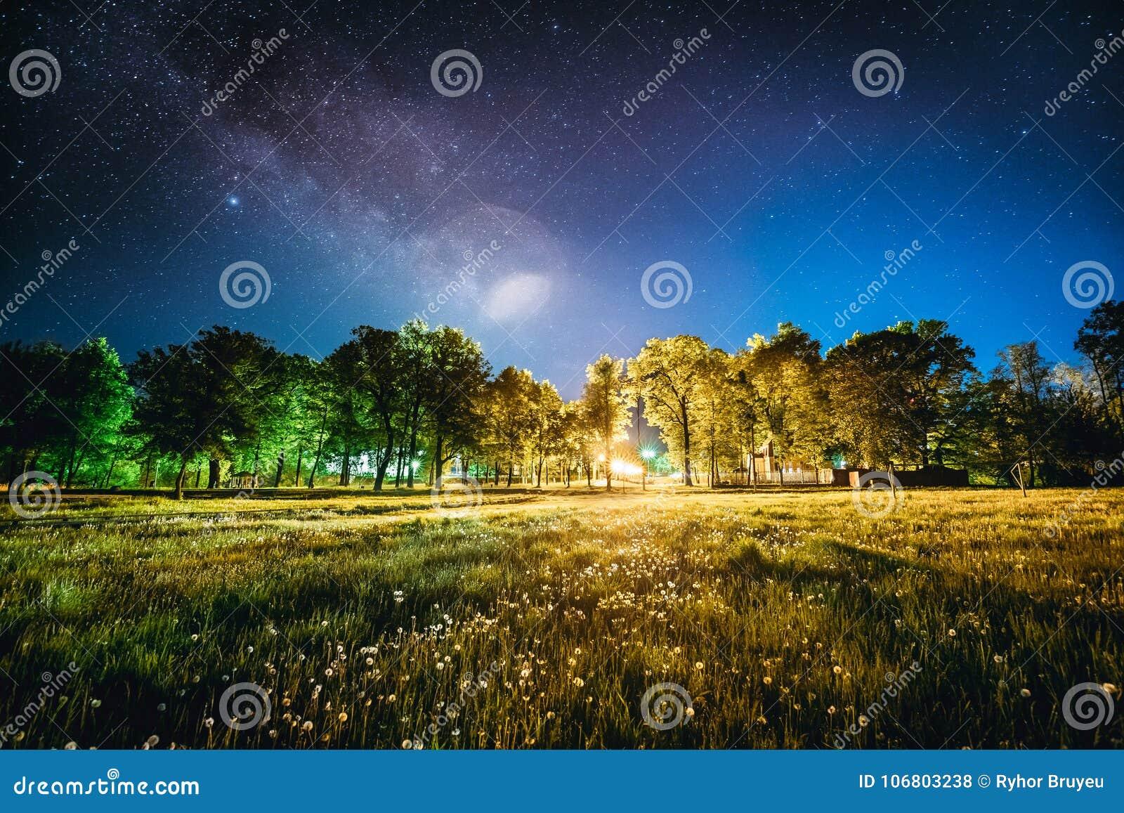 Bosque Verde De Los árboles En Parque Debajo Del Cielo Estrellado De