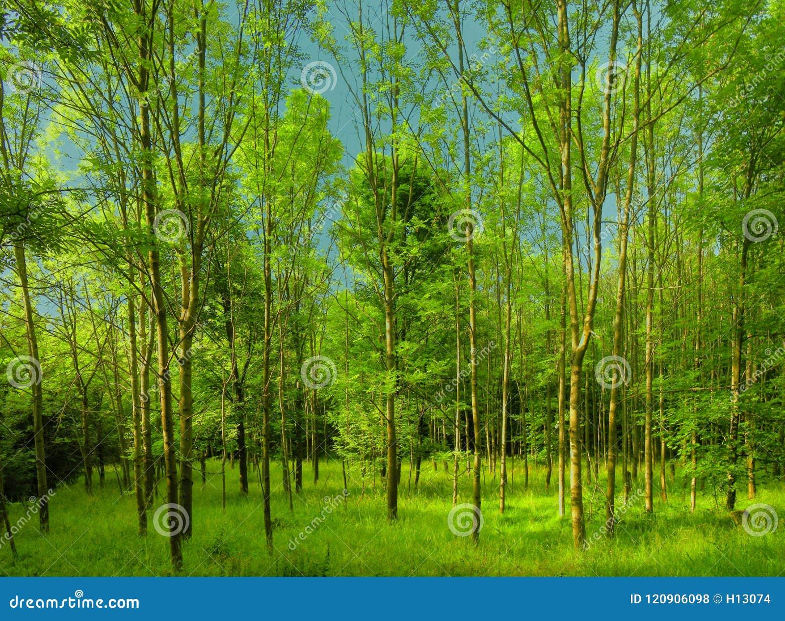 Bosque verde fresco en la luz del día de la primavera