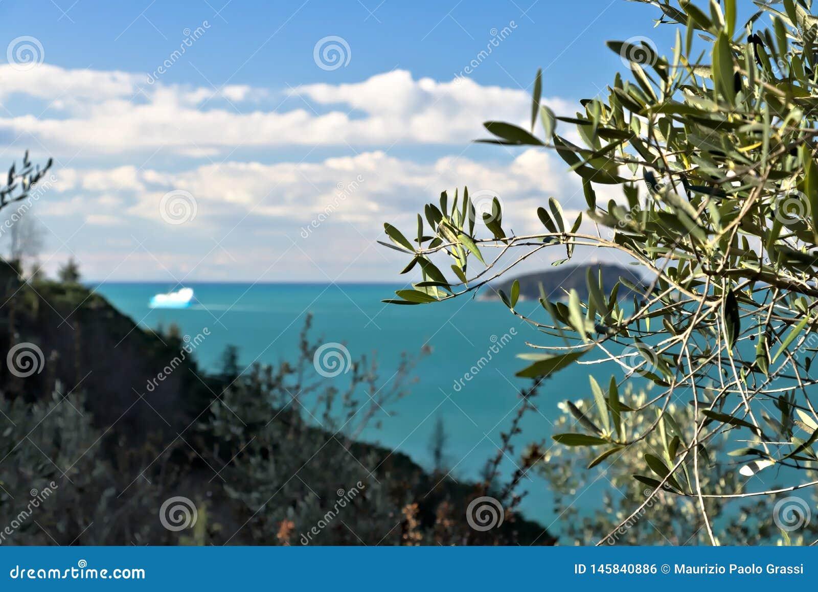 Bosque verde-oliva e jardim com opini?o do mar