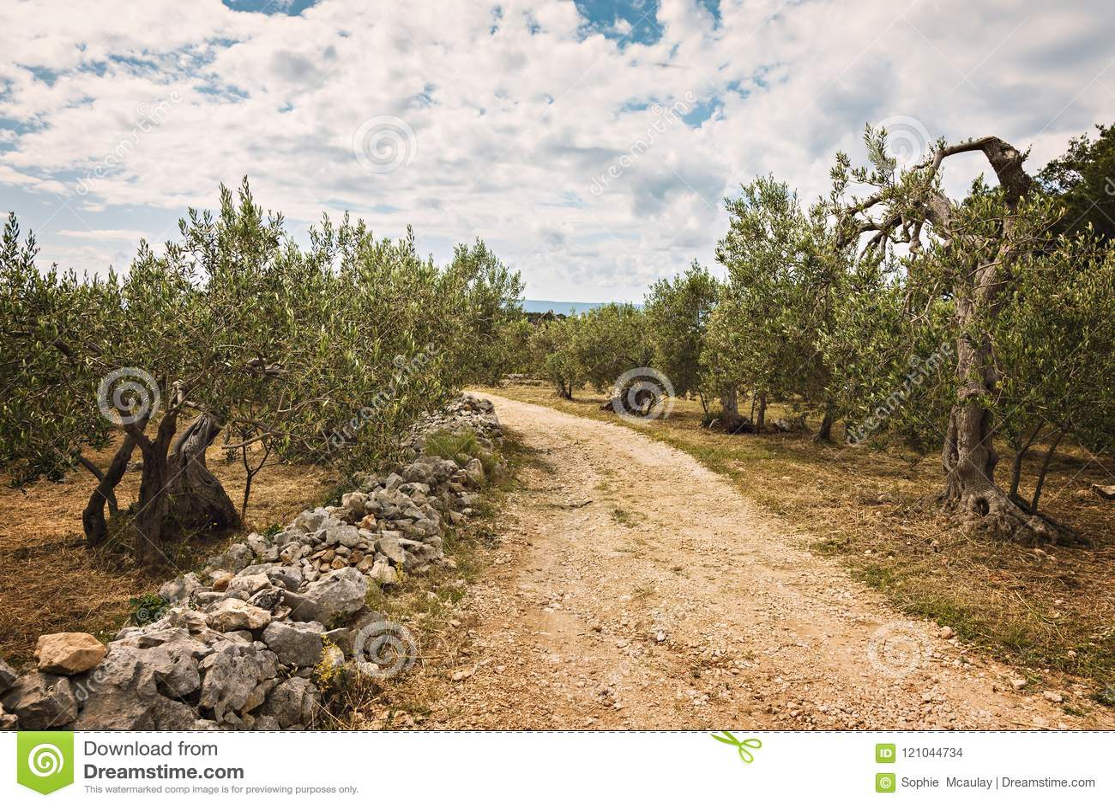 Bosque verde-oliva rural