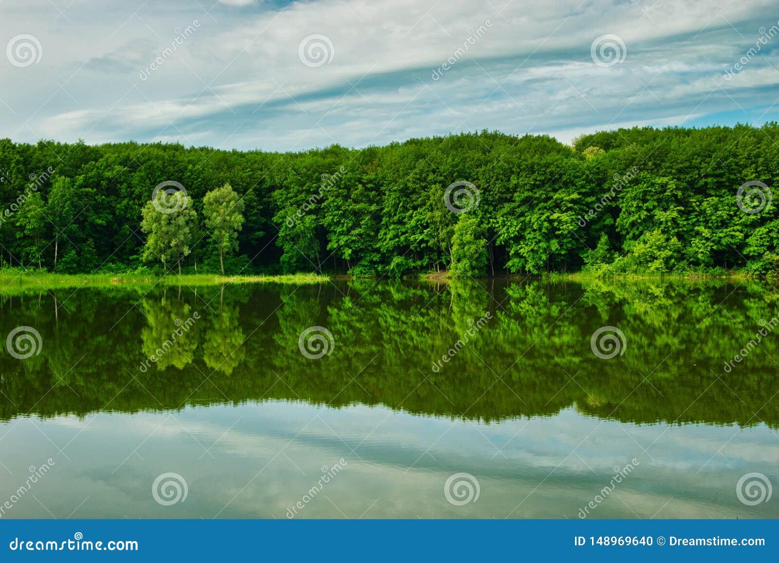 Bosque verde reflejado en el lago