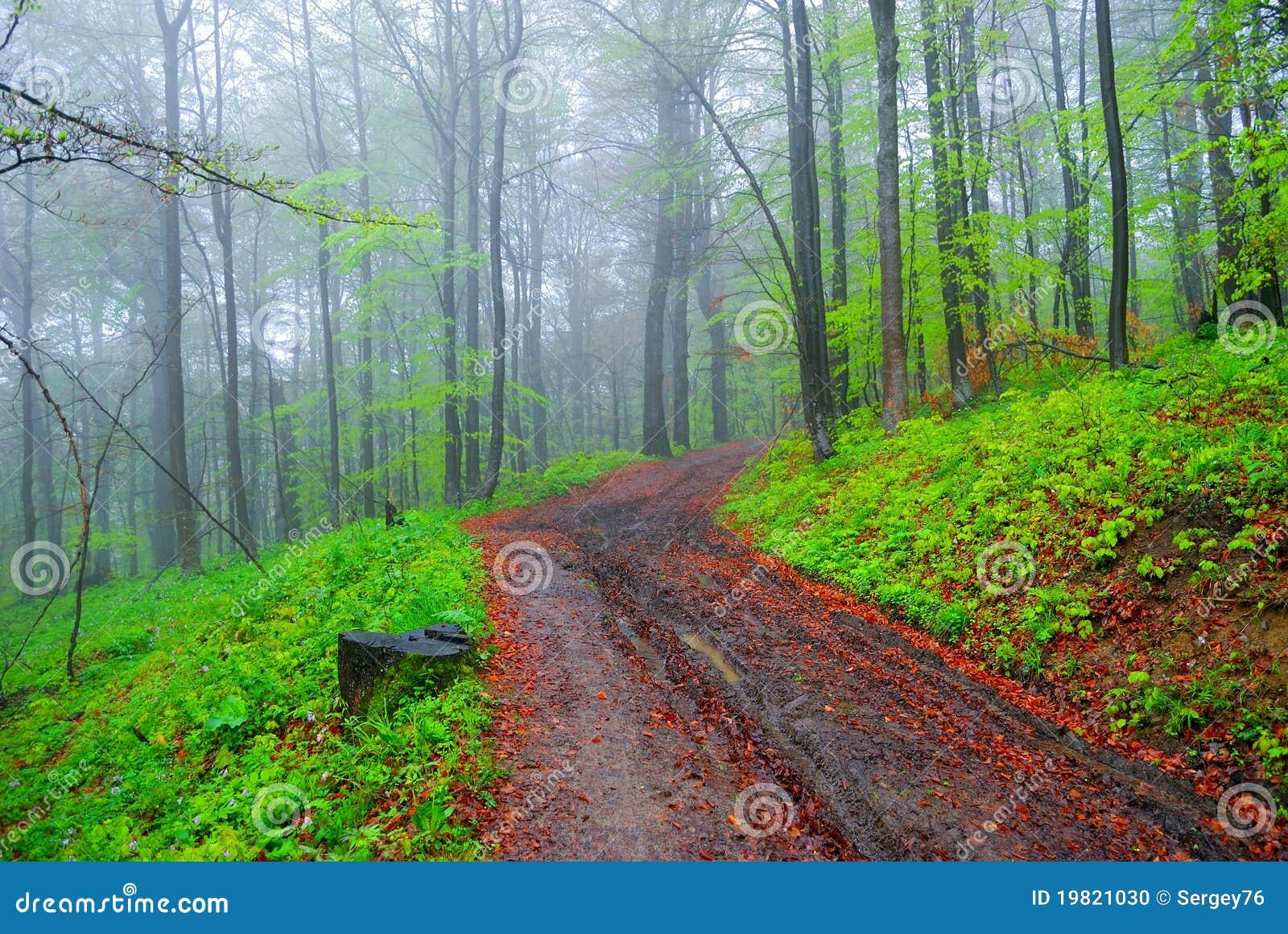 Bosque y camino de tierra brumosos