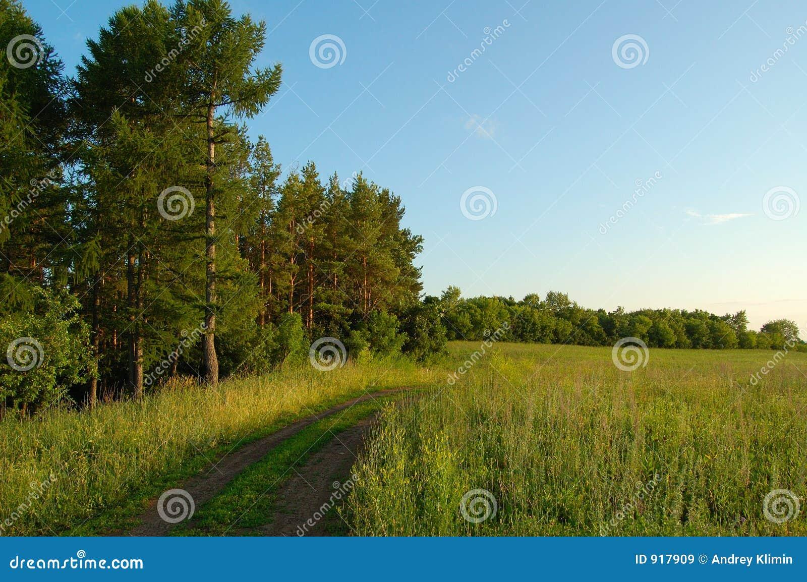 Bosque y campo