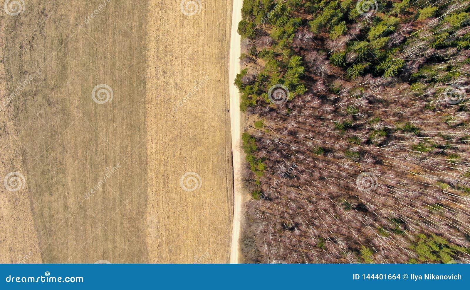 Bosque y campo separados por un camino