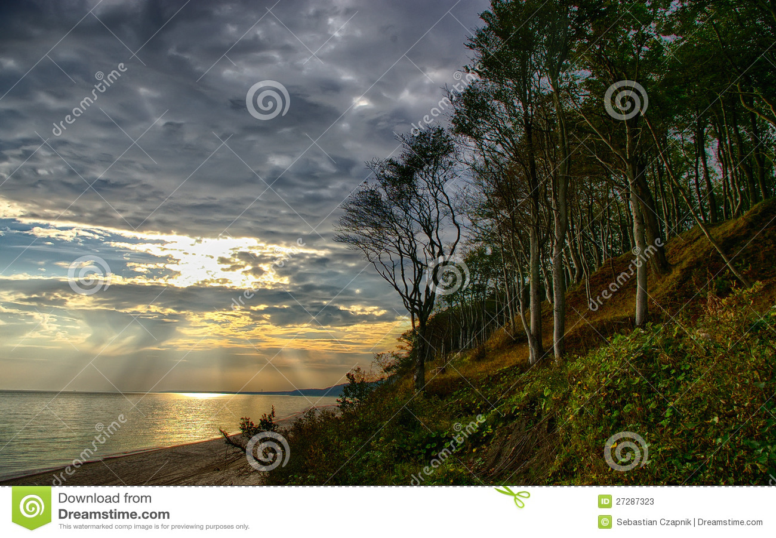 Bosque y orilla