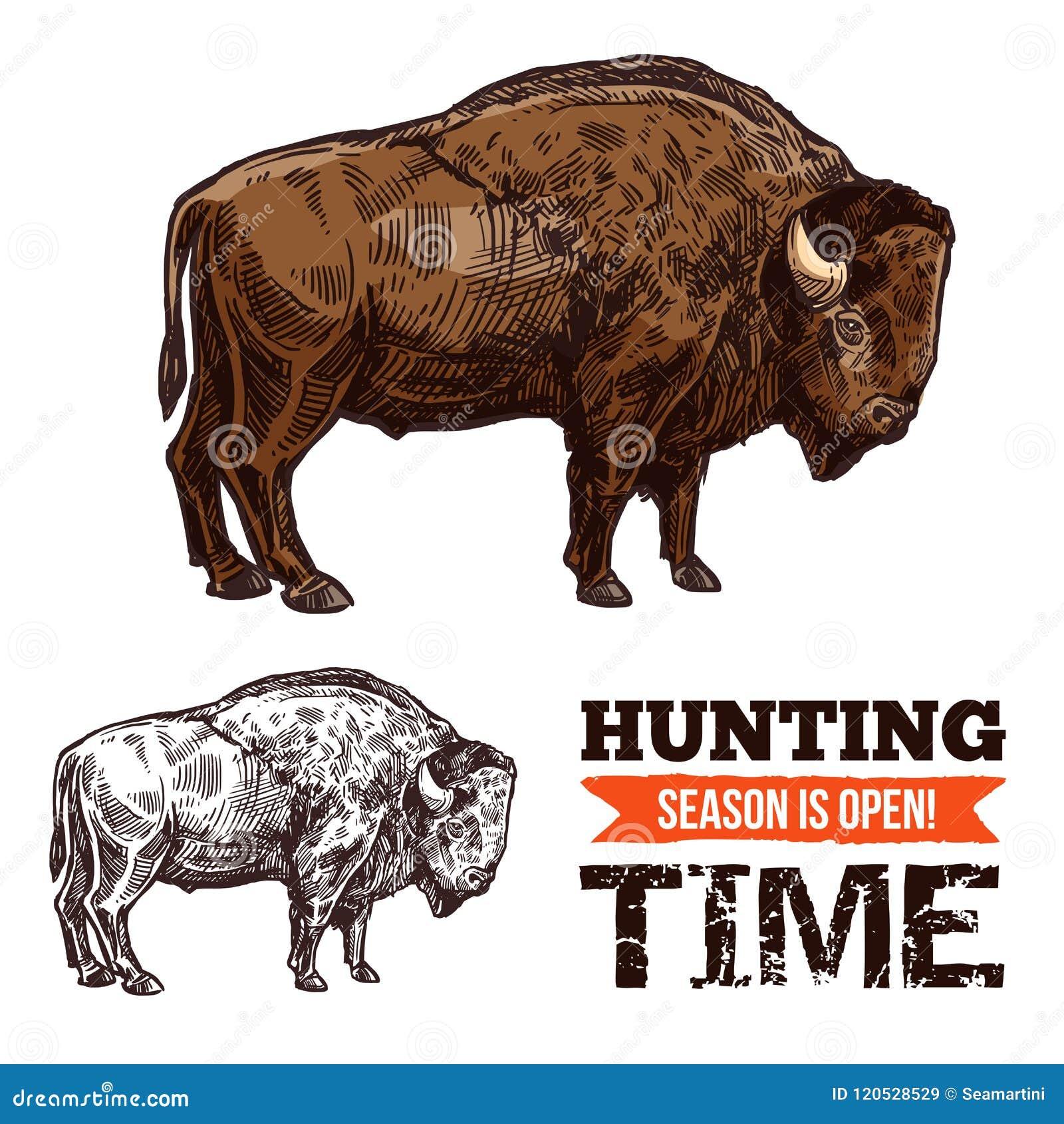 Bosquejo del animal salvaje del bisonte, del búfalo, del toro o del buey