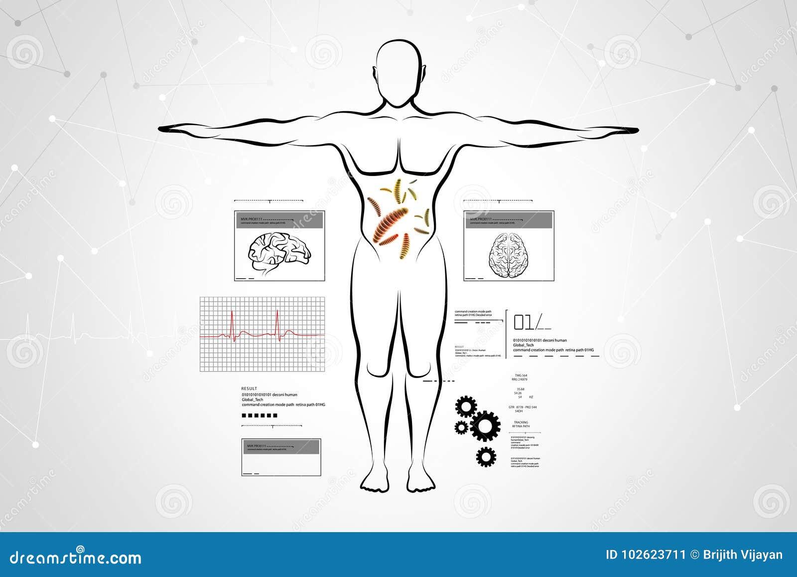 Bosquejo del cuerpo humano stock de ilustración. Ilustración de ...
