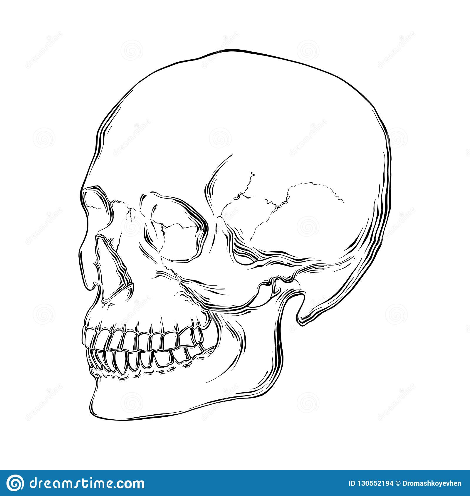 Bosquejo exhausto de la mano del cráneo humano en negro aislado en el fondo blanco Dibujo detallado del estilo de la aguafuerte d