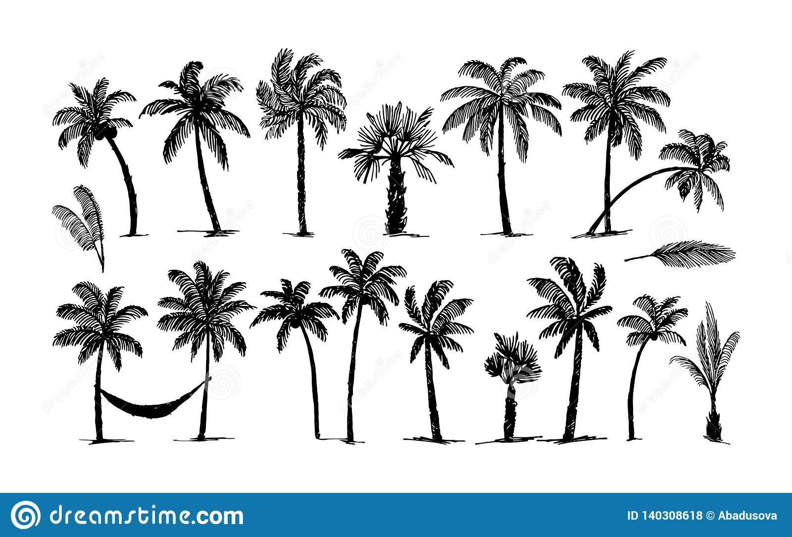 Bosquejo exhausto de la mano del vector del ejemplo del logotipo de la palma en el fondo blanco