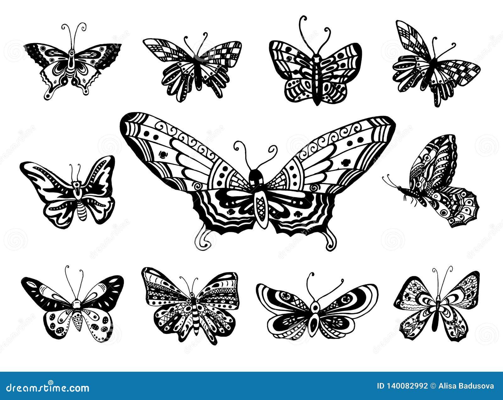 Bosquejo exhausto de la mano del vector del ejemplo de la mariposa en el fondo blanco