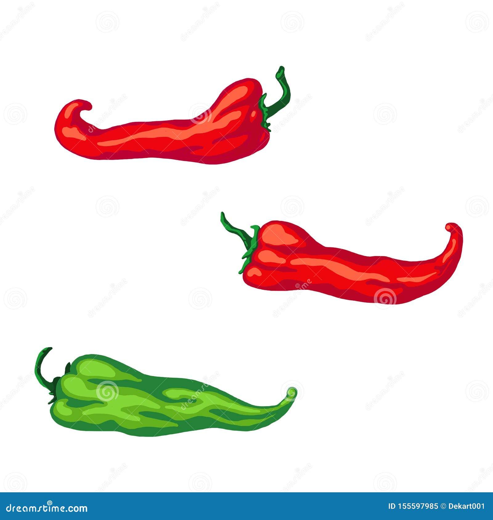 Bosquejo exhausto de la mano determinada rojo y pimienta verde del chile picante, aislada en el fondo blanco