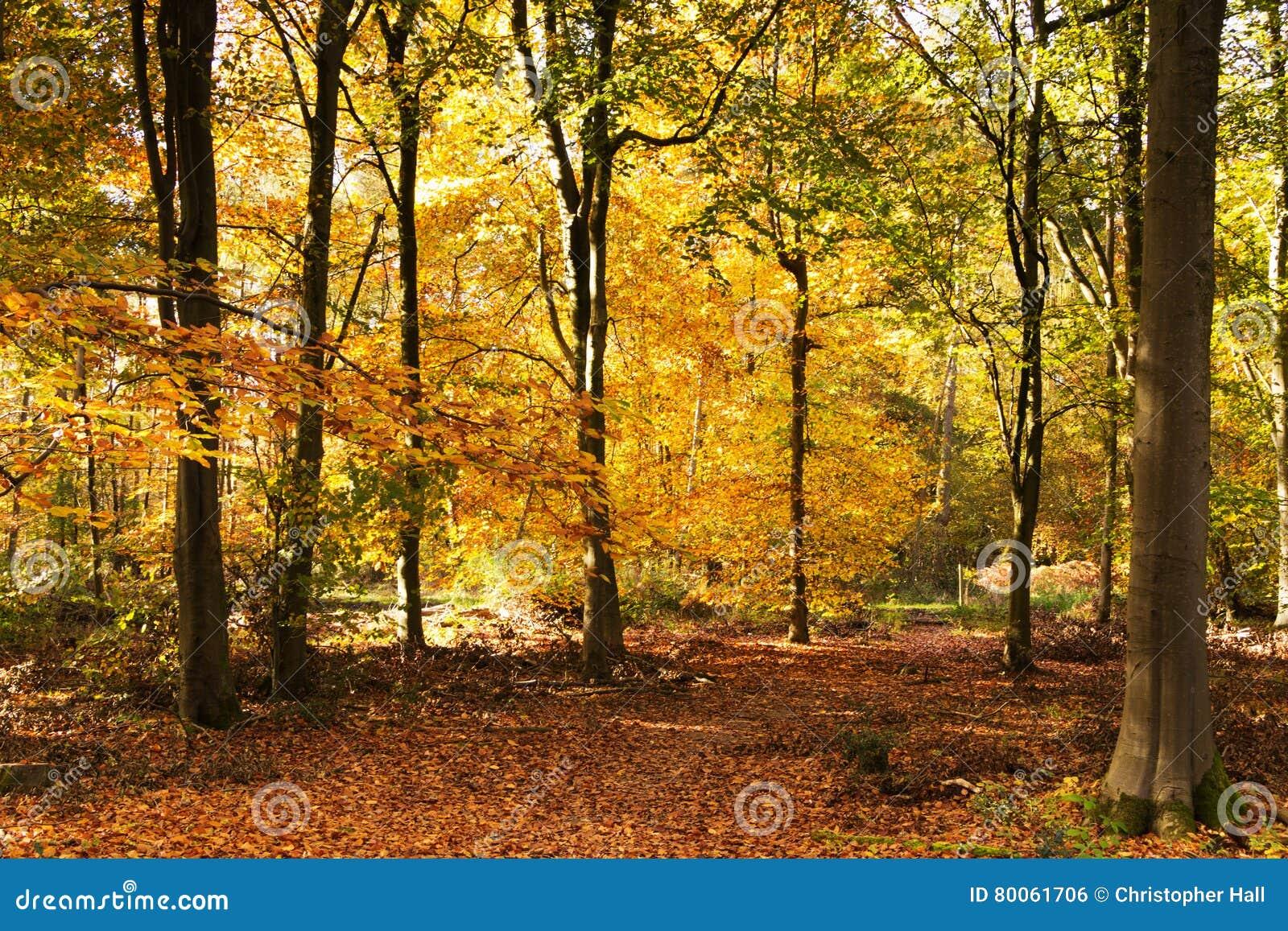 Bosscène met gele en bruine de herfstbladeren