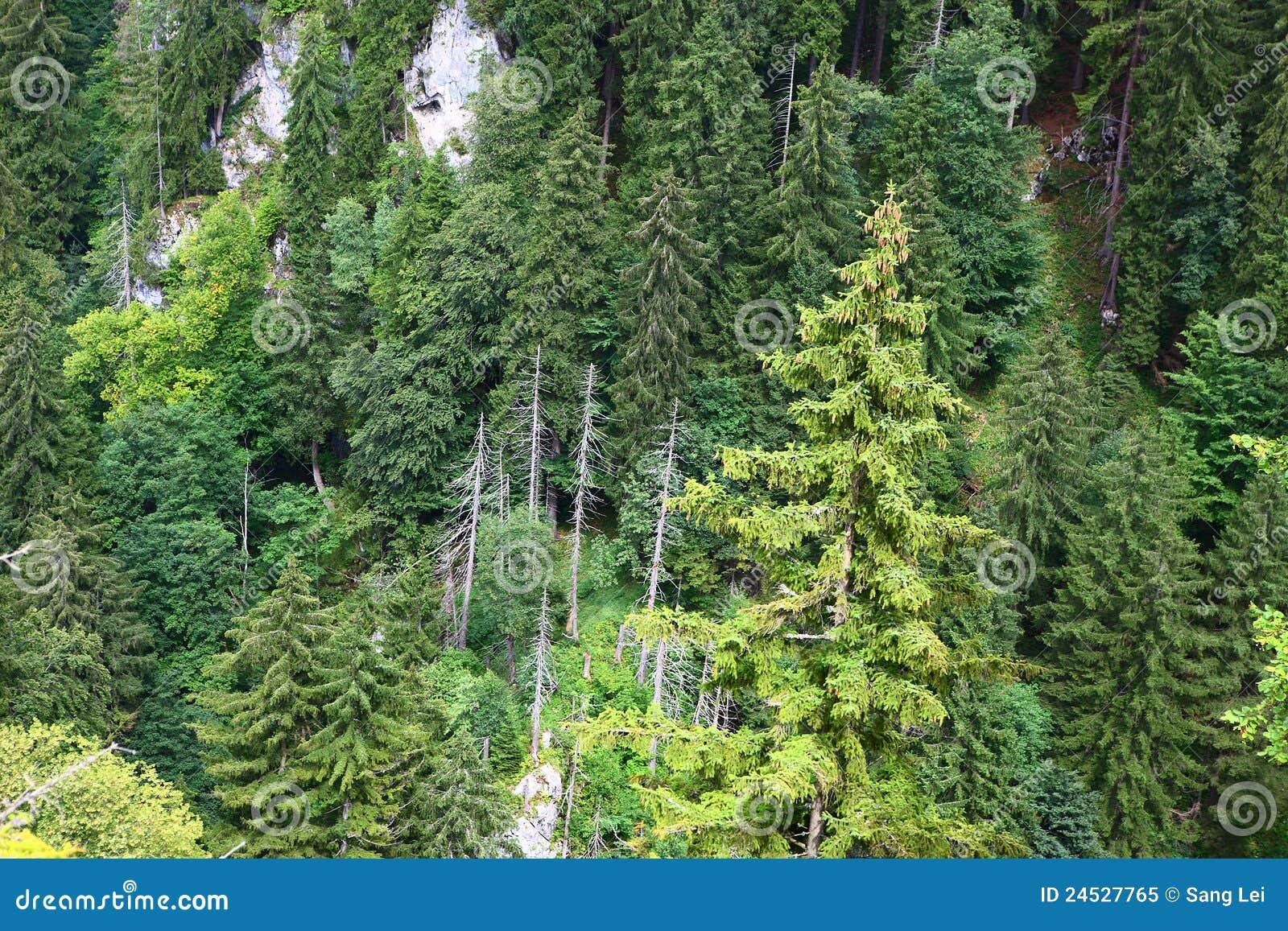 Bossen in alpen
