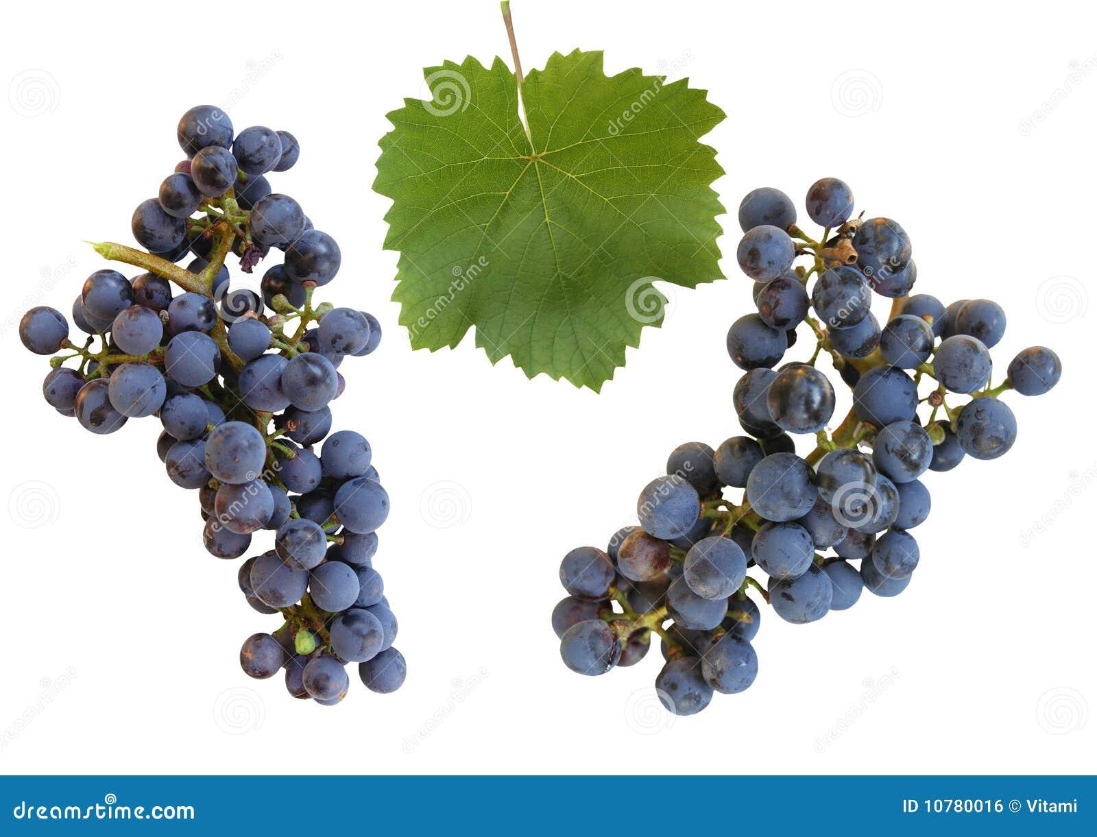 Bossen van druiven